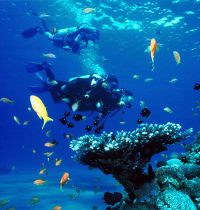 St. Kitts Yacht Services | Scuba Diving Activities